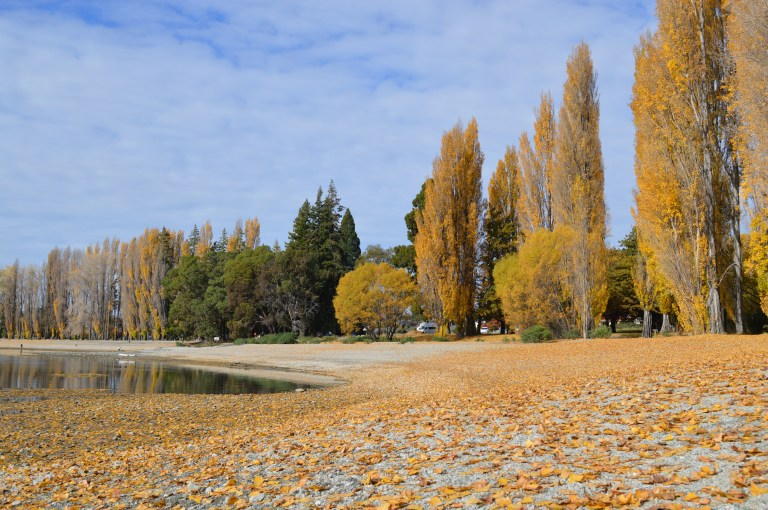 Autumn leaves on the shores of Lake Wanaka