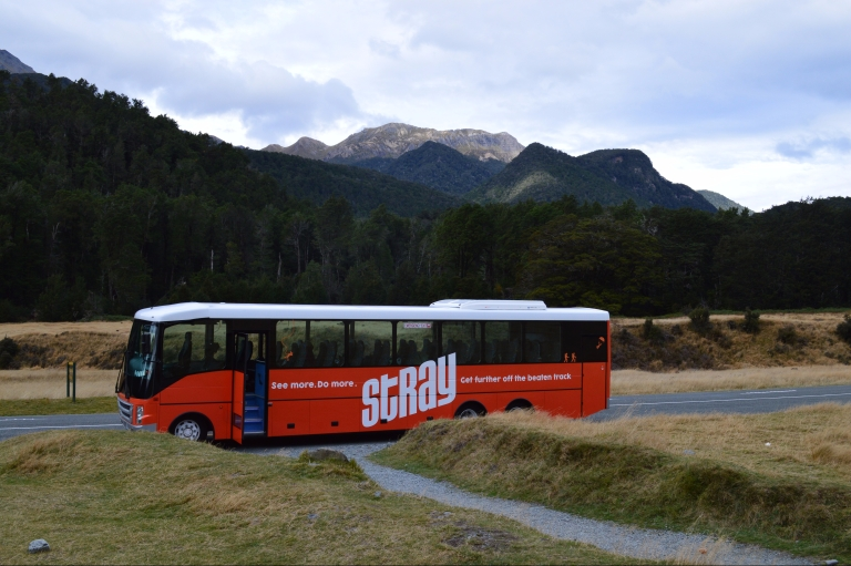 Stray Bus New Zealand